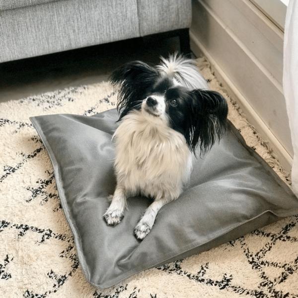 Vaaleanharmaa koiranpeti