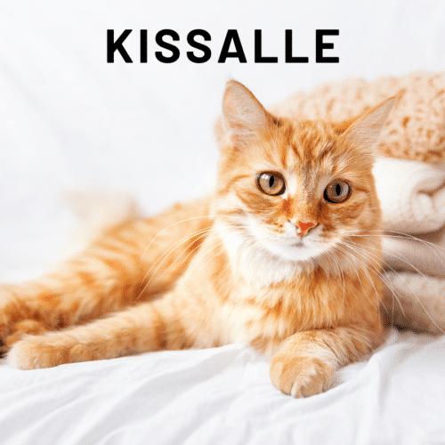 Kissalle